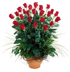 red roses arrangement